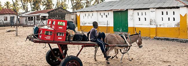 Jainaba-Fofana-Horse-Taxi-Gambia-Africa-Fashion